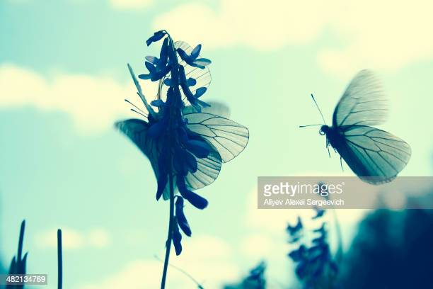 Butterflies landing on flower