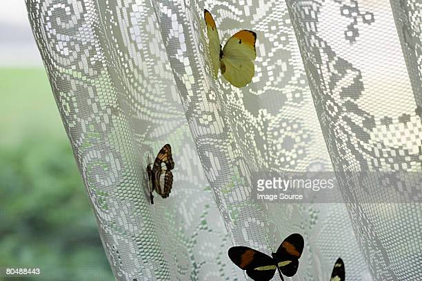 Butterflies on net curtain