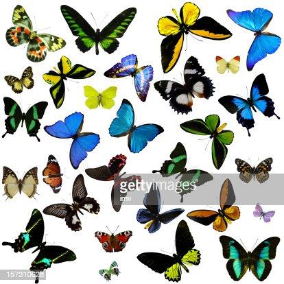 Schmetterlinge : Stock-Foto