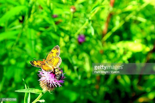 Butterfly And Bee Pollinating On Purple Flower