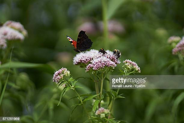 Butterfly And Bees On Flower In Park