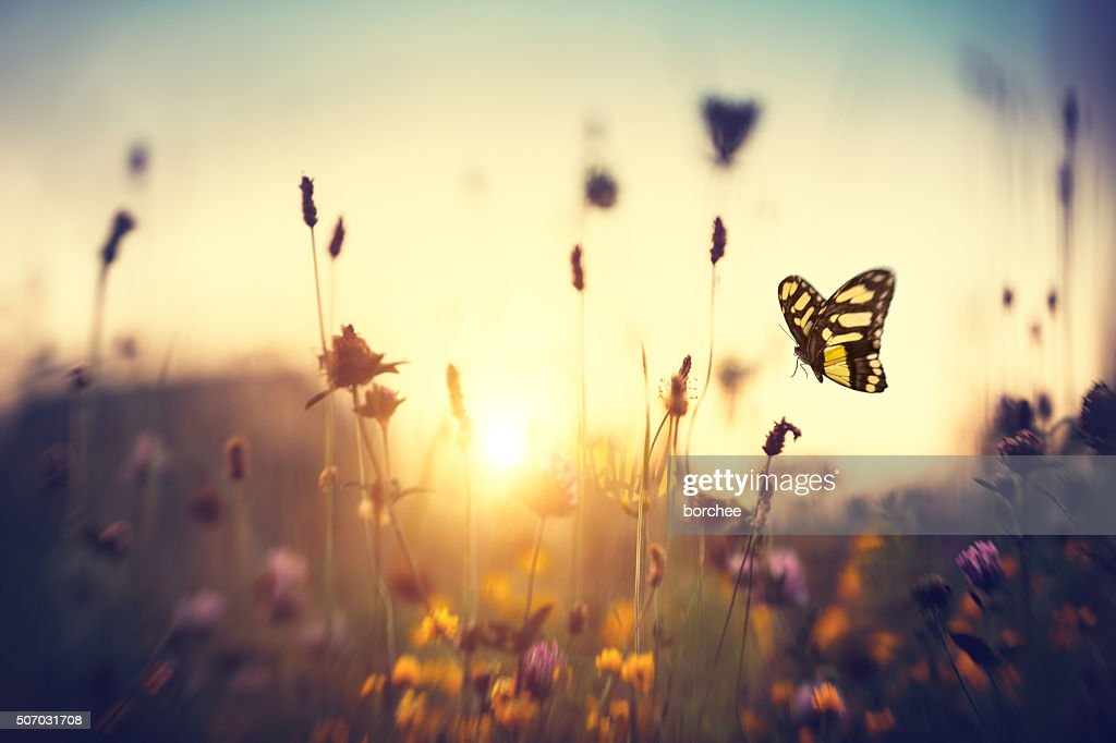 Butterfly At Sunset : Stock Photo