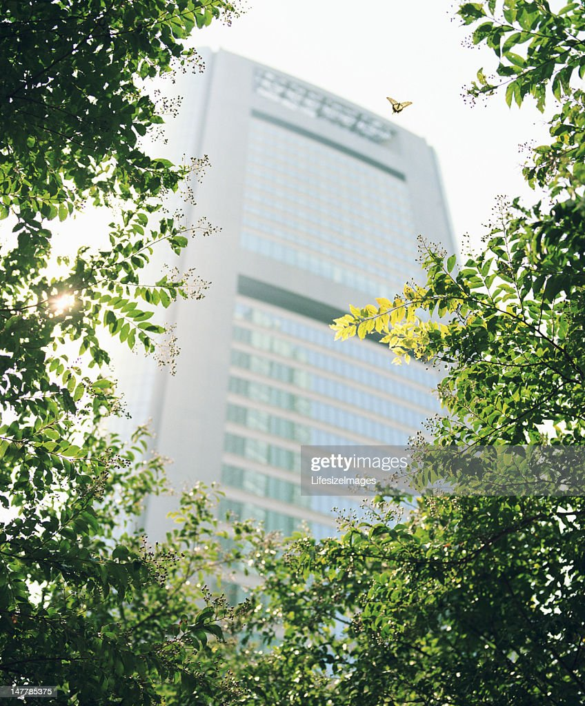 Butterfly beside tree, skyscraper in background, low angle view : Stock Photo
