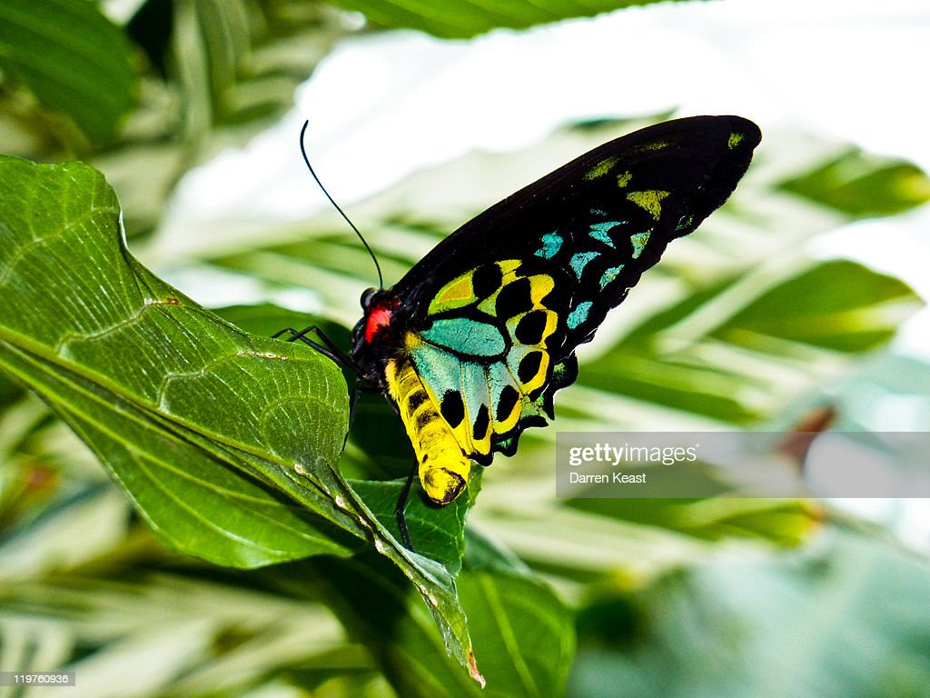 butterfly conservatory 1 niagara falls ontario stock photo. Black Bedroom Furniture Sets. Home Design Ideas