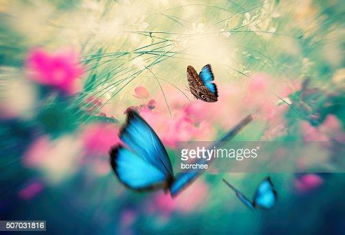 Butterfly-Garten
