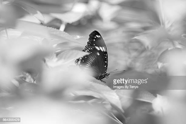 A butterfly in a bush