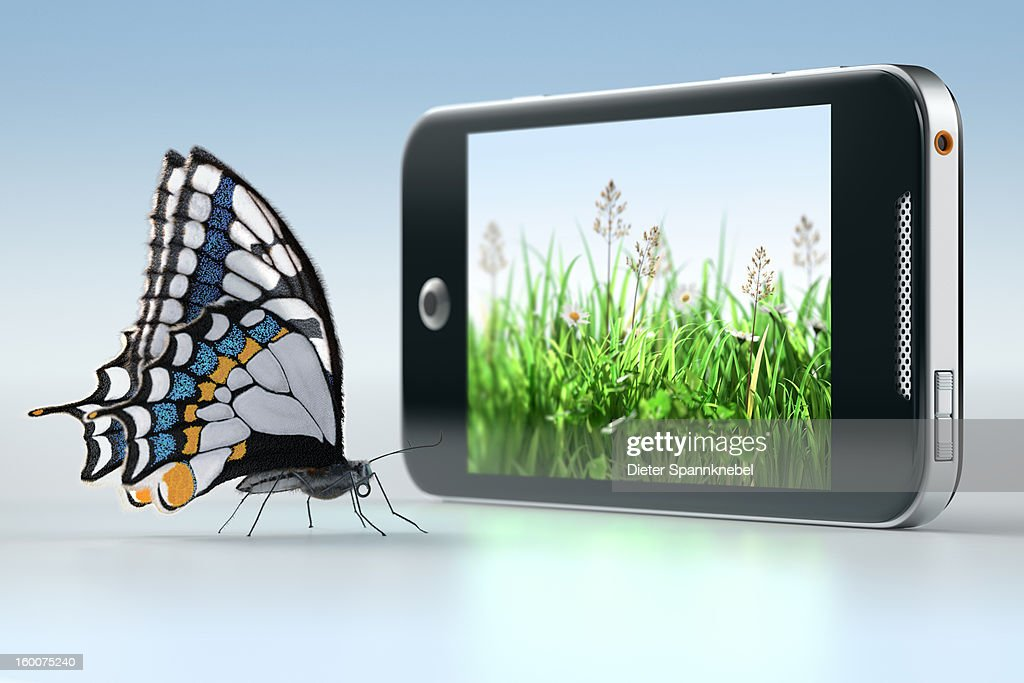 Butterfly in front of smartphone displaying grass : Stock Photo