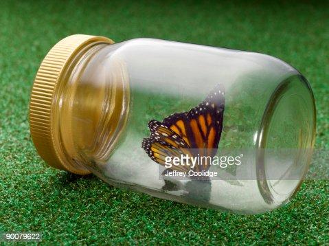 Butterfly in Glass Jar