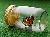 Butterfly in Glass Jar