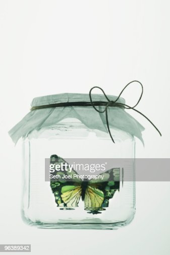 Butterfly in glass jar with paper cover