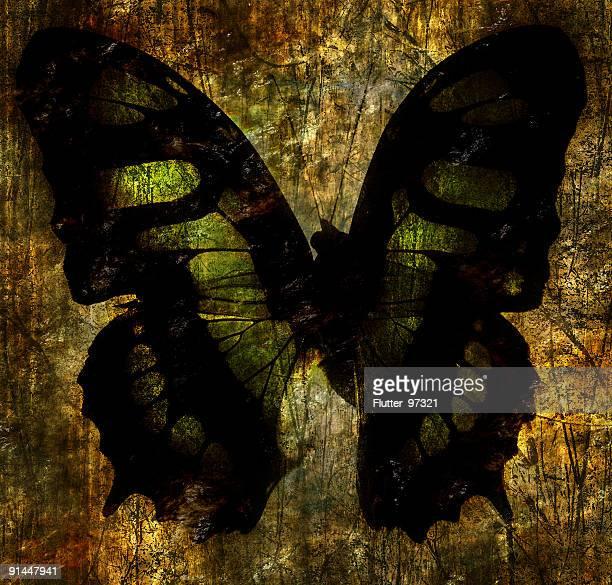 Butterfly in Stone