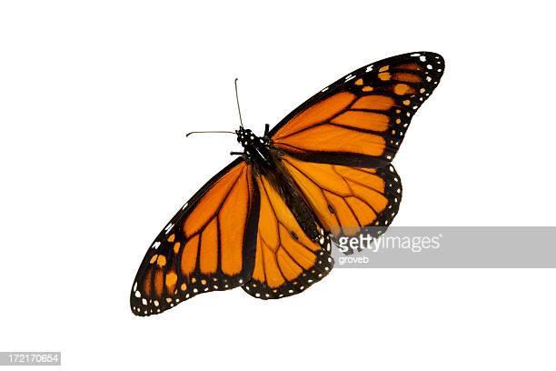 Farfalla isolato su bianco