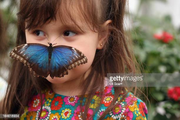 A butterfly lands on a girl in the 'Sensational Butterflies' exhibition at the Natural History Museum on March 25 2013 in London England The live...