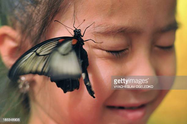 A butterfly lands on the face of a girl during a Butterflies exhibition in Bishkek on October 19 2013 AFP PHOTO/VYACHESLAV OSELEDKO