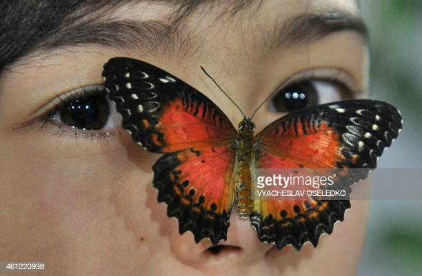 A butterfly lands on the face of a girl during a Butterflies exhibition in Bishkek on January 9 2015 AFP PHOTO / VYACHESLAV OSELEDKO
