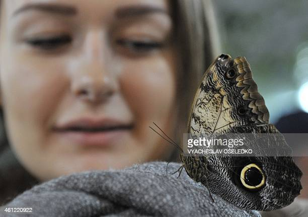A butterfly lands on the shoulder of a woman during a butterflies exhibition in Bishkek on January 9 2015 AFP PHOTO / VYACHESLAV OSELEDKO