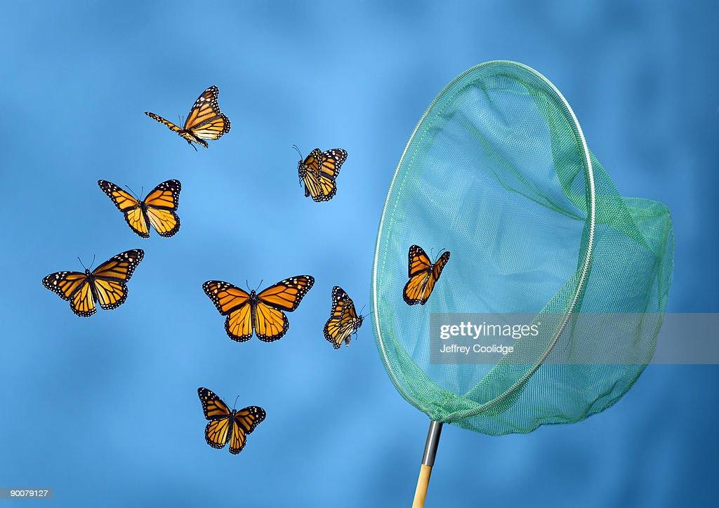 Butterfly Net Catching Butterflies : Stock Photo