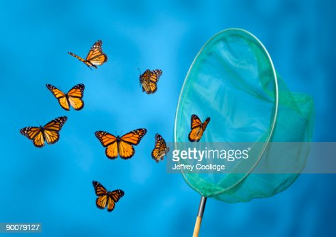Butterfly Net Catching Butterflies : Stock Photo