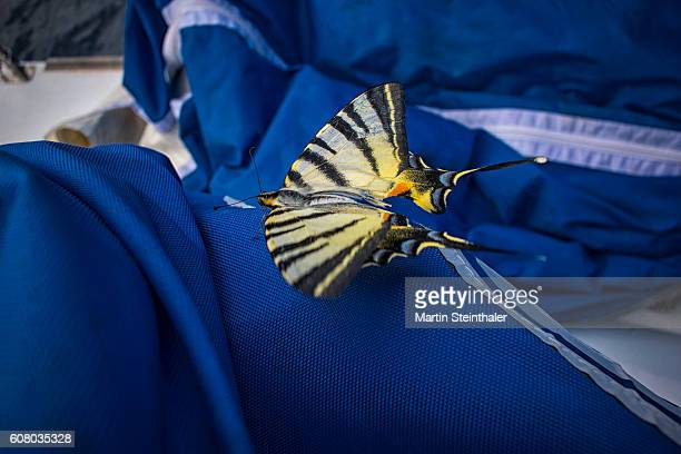 Butterfly on a sailing boat