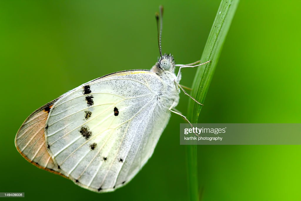 Butterfly on Blade of Leaf : Stock Photo