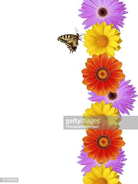 Schmetterling auf daisy Grenze XXL