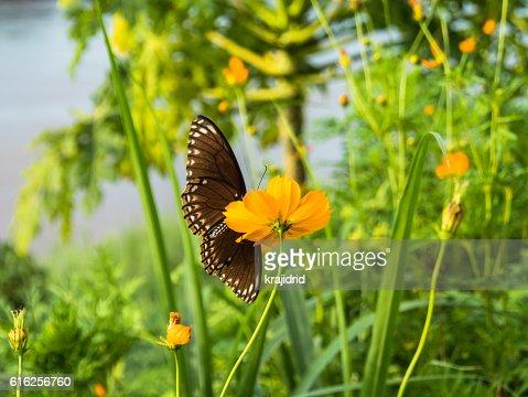 Borboleta em flor : Foto de stock