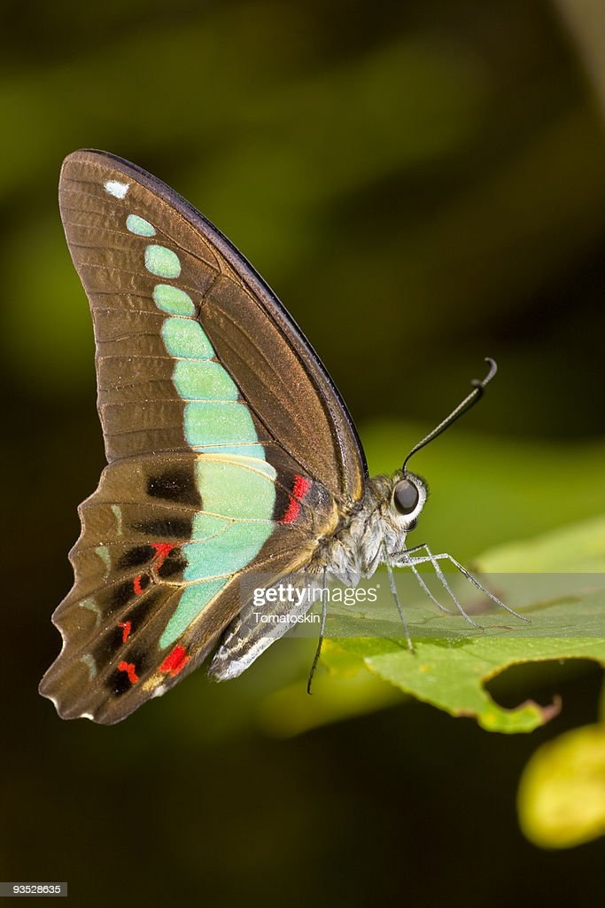 Butterfly on leaves : Stock Photo