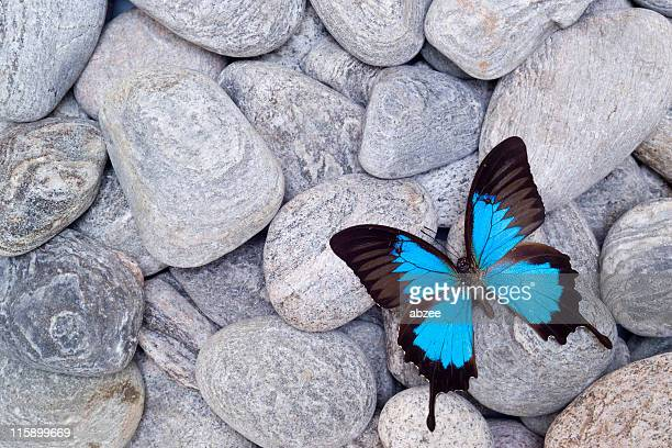 Butterfly on pebbles