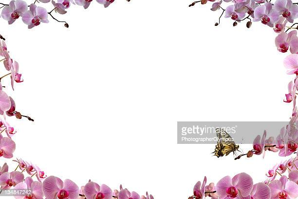 Butterfly on pink orchid frame