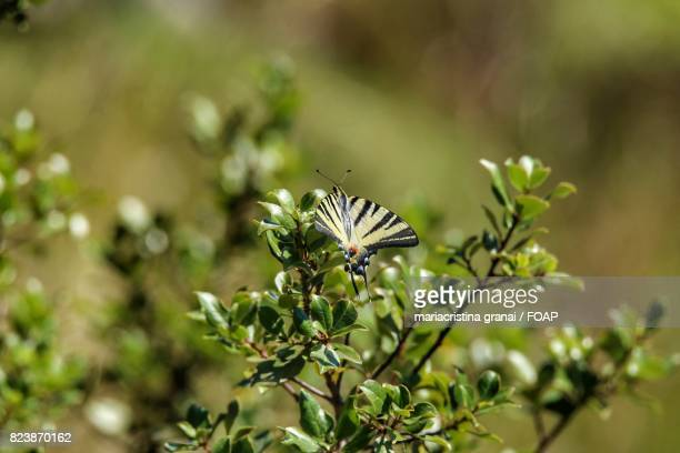 Butterfly on plant outdoors