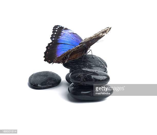Butterfly on rocks.