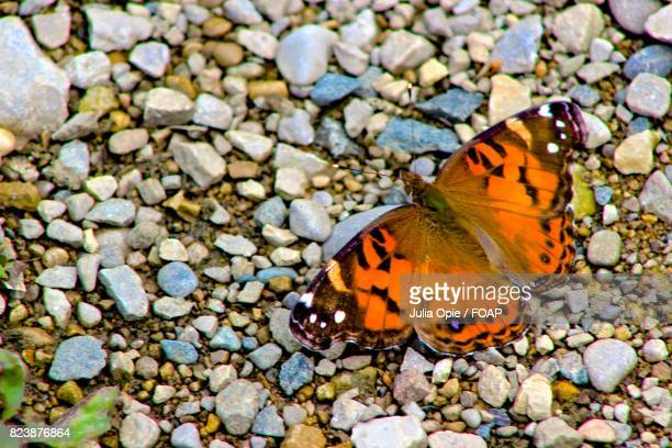 Butterfly on small stone