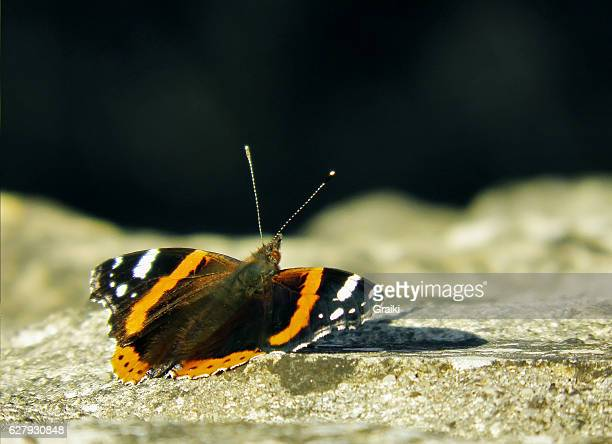 Butterfly on the stone.