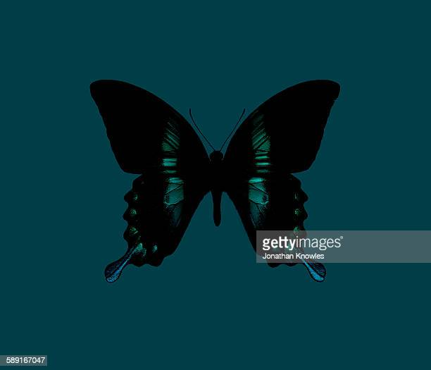 Butterfly on turquoise background