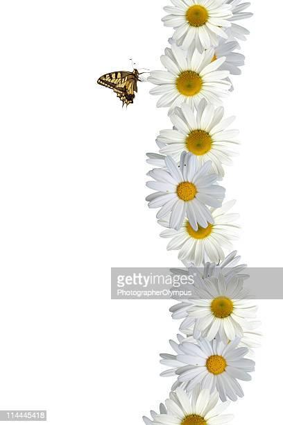 Schmetterling auf Blume Grenze XXXL vertikale