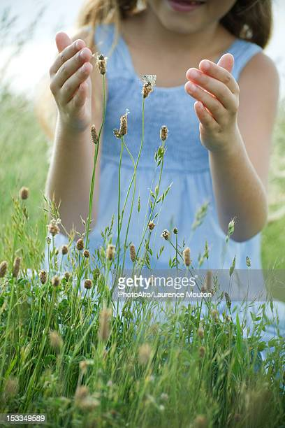 Butterfly on wildflower, girl with cupped hands attempting to catch
