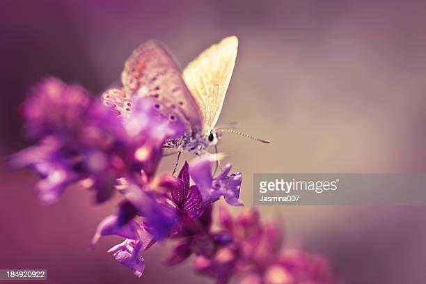 Mariposa en flor silvestre