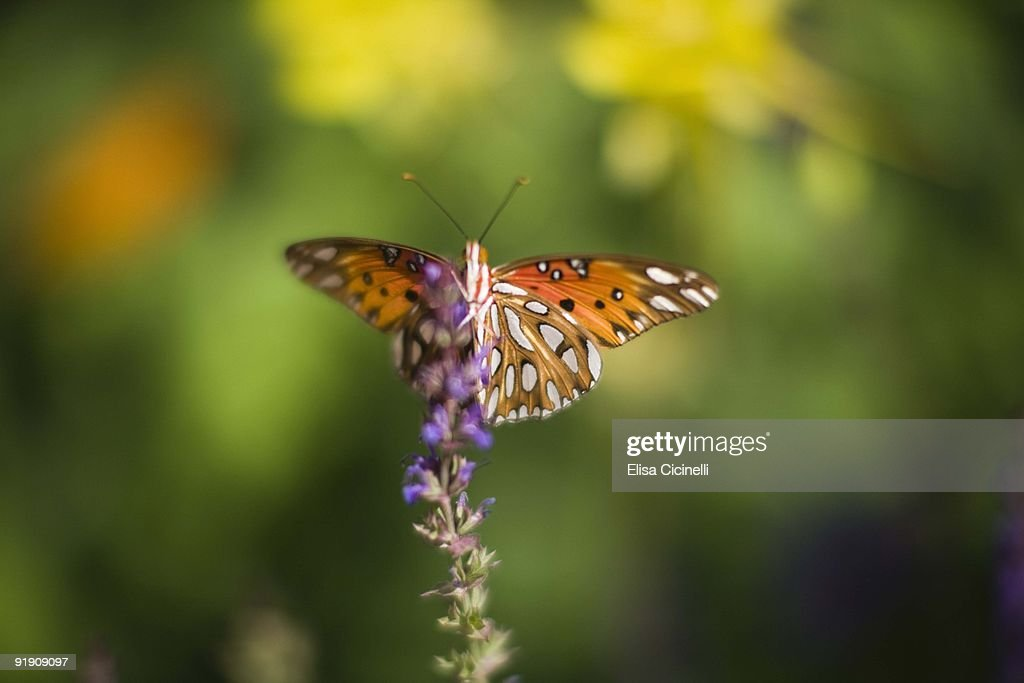 Butterfly on wildflowers : Stock Photo