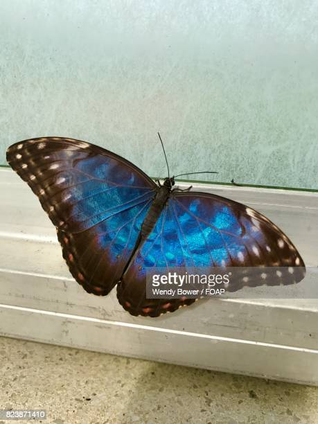 Butterfly on window sill