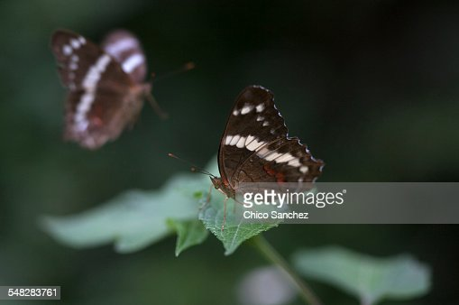A butterfly perched on a flower in Xilitla, San Luis Potosi, Mexico