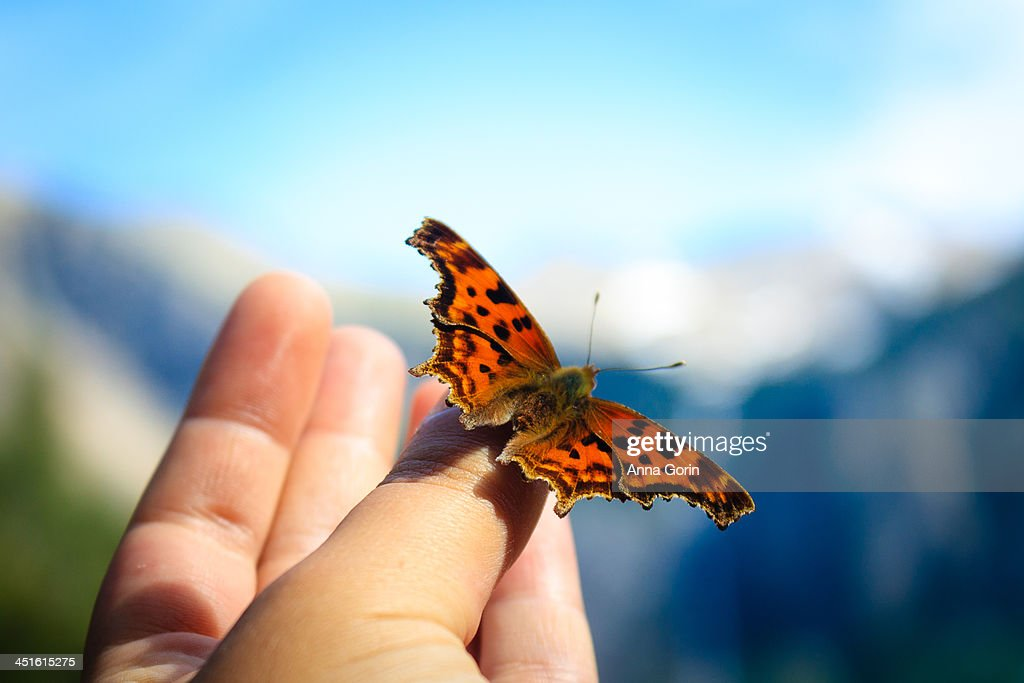 Butterfly perched on human hand outdoors