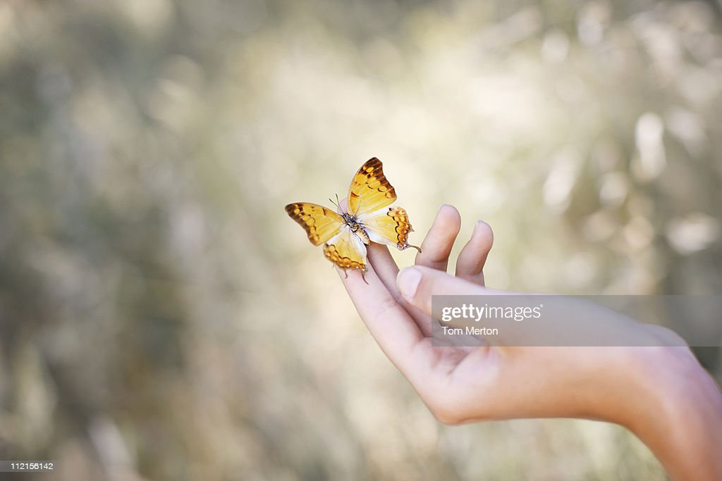 Butterfly perched on womans hand : Stock Photo