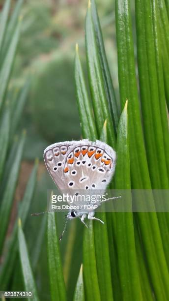 Butterfly perching on blade of grass