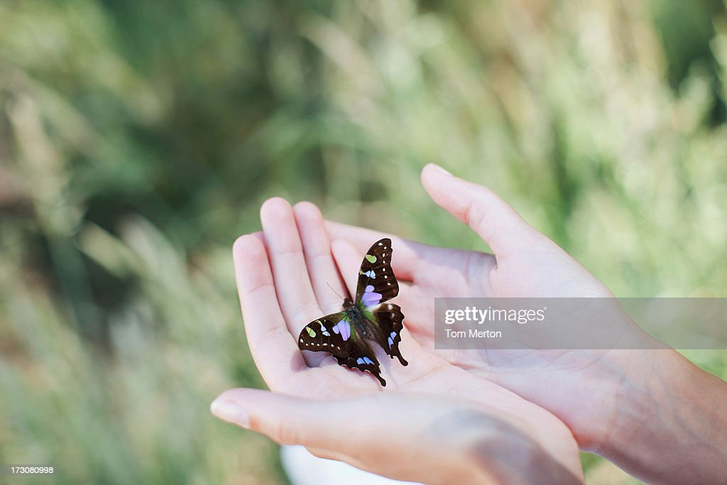 Butterfly perching on woman's hands