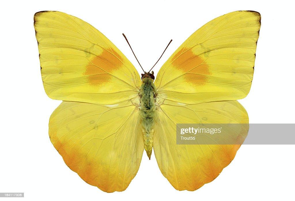 Butterfly - : Stock-Foto
