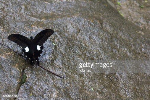 Farfalla : Foto stock