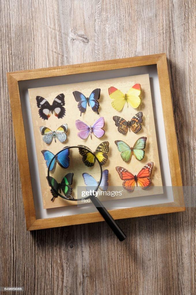 butterfly : Foto stock