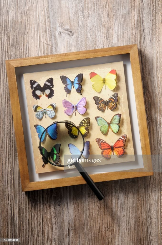 butterfly : Bildbanksbilder