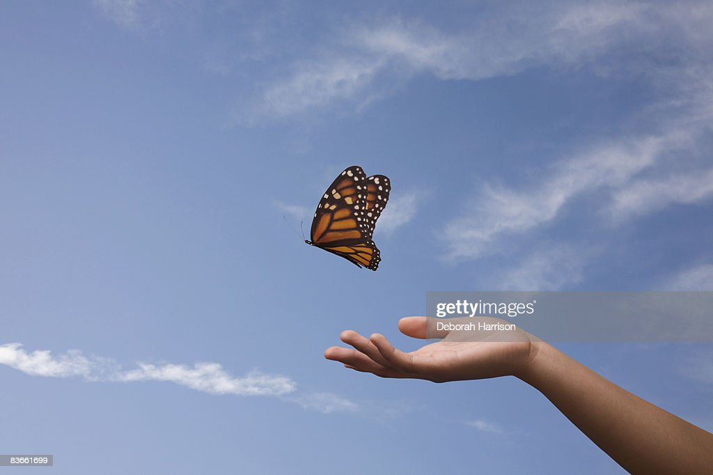 Butterfly release, one hand : Stock Photo