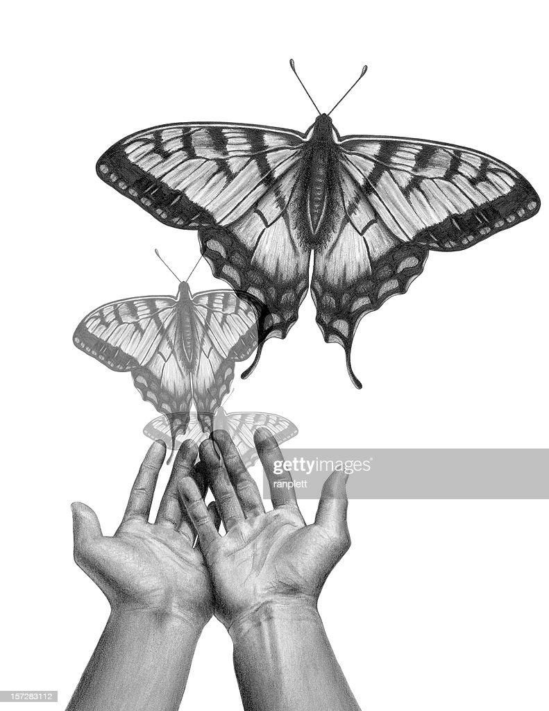 Butterfly Release : Stockfoto